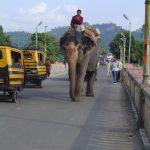 india-haridwar-elephant-on-street