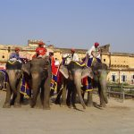 india-jaipur-elephants