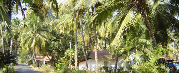 india-goa-benaulim-tropical-region