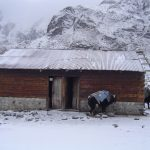 india-sikkim-goecha-la-hut