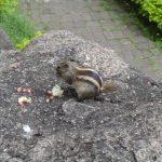 india-ajanta-caves-squirrel