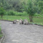 india-ellora-monkeys