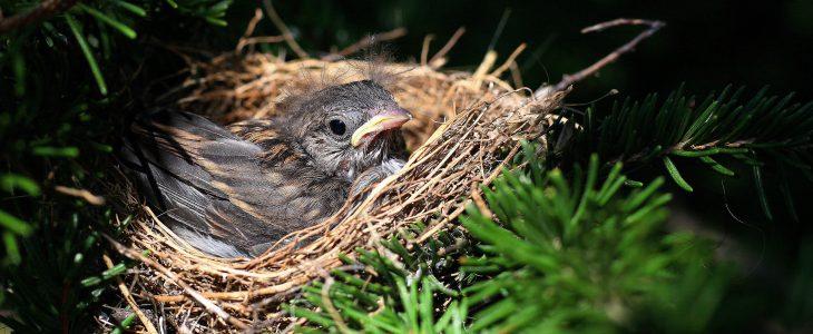 leaving-the-birds-nest