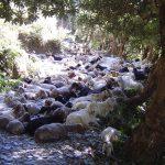 india-dharamsala-mcloed-ganj-triund-trek