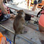 thailand-koh-lanta-monkey