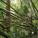 thailand-khao-sok-monkey-family