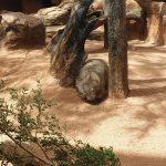 australia-sydney-wildlife-zoo