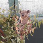 australia-sydney-wild-life