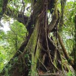 costa-rica-monteverde-cloud-forest