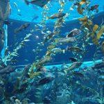 canada-toronto-aquarium